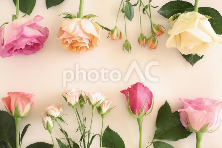 薔薇のフレーム 6の写真