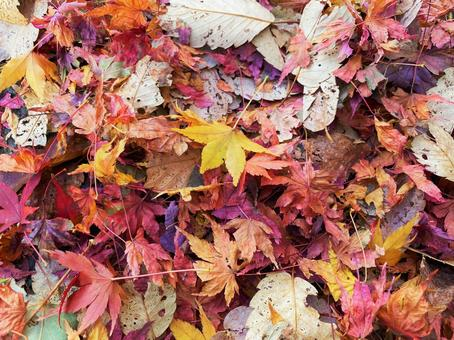 Autumn leaves that change in color