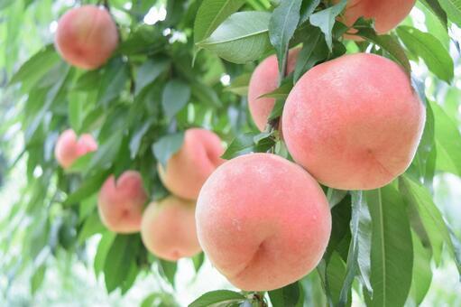 과일 따기 6