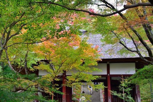 Jōjakkoji Temple Niomon Tomomiji Autumn Leaves 004