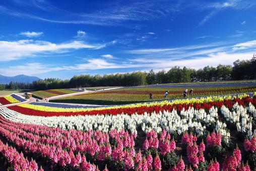비 에이의 아름다운 꽃밭
