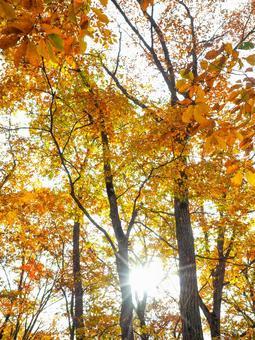 Autumn leaves and sunbeams
