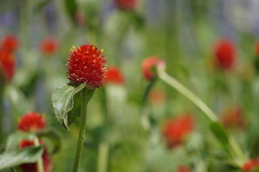 Strawberry-like flower