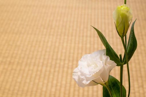 Turkish bellflower