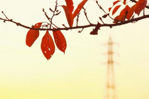 Autumn leaves_Sakura