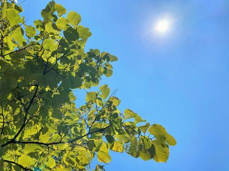 구름 한 점없는 하늘 아래 나무