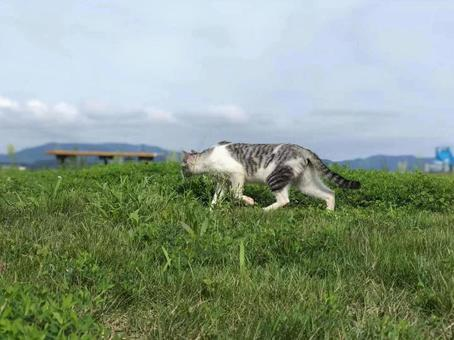 躍動感のある猫 part 2