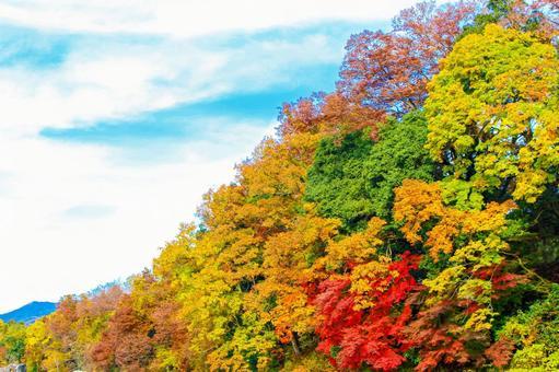 Autumn leaves autumn gradation