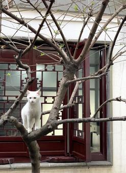 나무 타기하고있는 흰 고양이