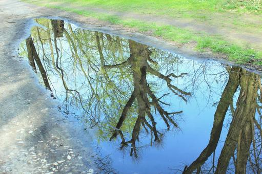 Upside down tree reflected in a puddle