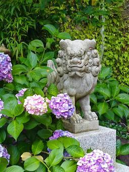 Hydrangea and guardian dog