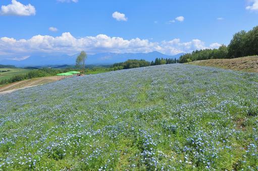 사계 채의 언덕 네모 피라의 꽃밭