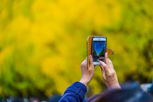 Jingu gaien gate over smart phone ginkgo row trees