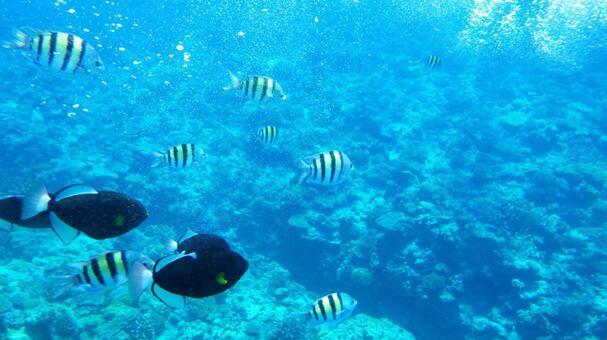 오키나와 수중 사진 31