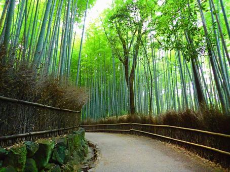 Kyoto Arashiyama · Bamboo forest small diameter 2