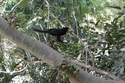 Pakistan bird 13