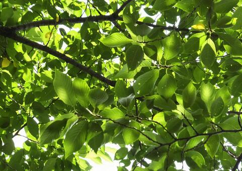 Background (green - trees) [tree] -072