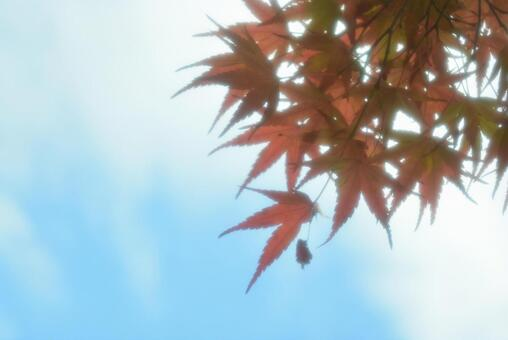 Autumn leaves and sky