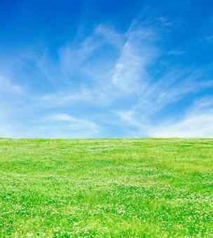 A meadow of blue sky and clover_2