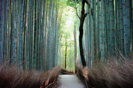 Kyoto Arashiyama Small diameter of bamboo forest shining by light