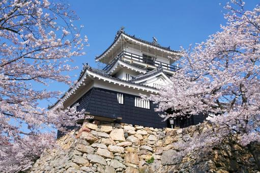 Hamamatsu Castle in full bloom