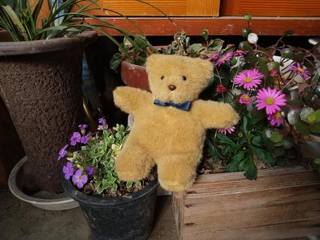 Plush bear, entrance and spring flowers