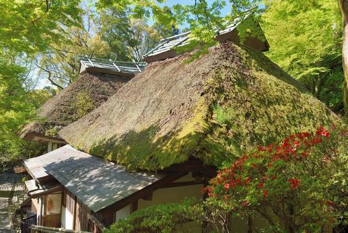 """Daikozenji Temple """"Main Hall"""" in the fresh green period"""
