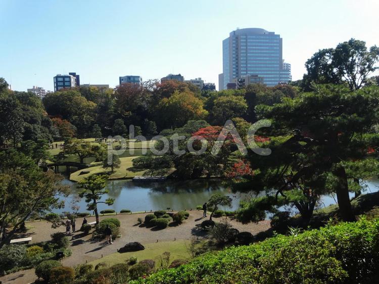 東京 六義園の遠景の写真