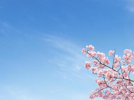 Sakura and blue sky 2