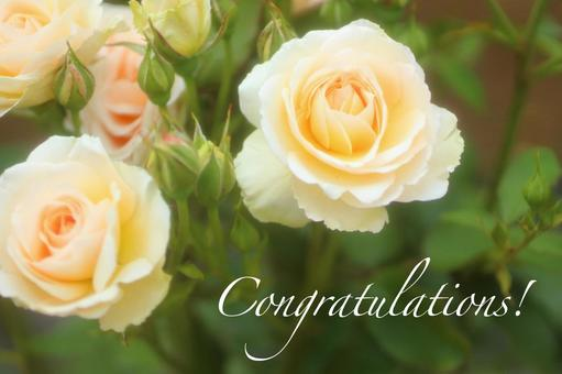Congratulations on the message card of Rose