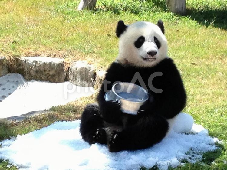 ミルクを飲んでるパンダ6の写真