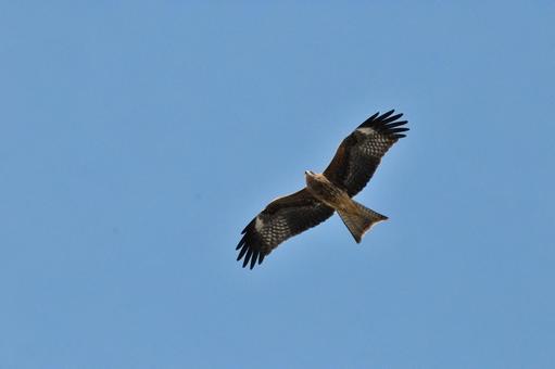 하늘을 나는 독수리
