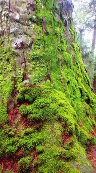 이끼가 끼는 나무