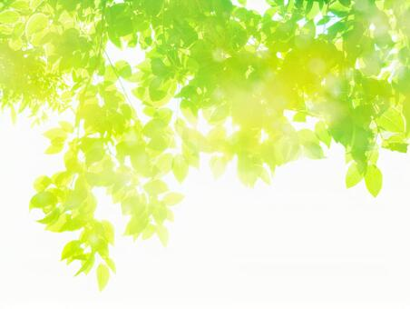 Fresh green sunbeams image-abstract background material