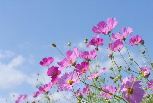 Refreshing blue sky and cosmos