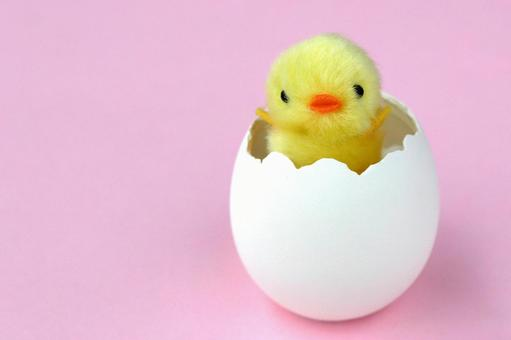 Chicks from eggs