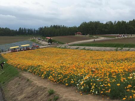 홋카이도 비 에이의 꽃밭 (사계 채의 언덕)