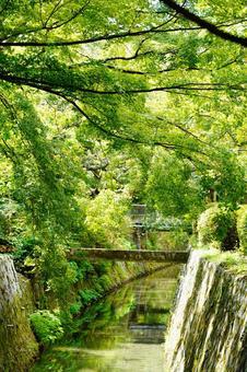Kyoto Philosophy Road Wallpaper