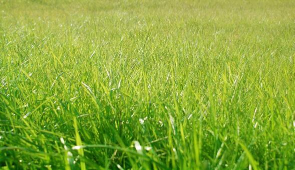 Lawn_background_40