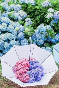 Umbrella with hydrangea ⑥