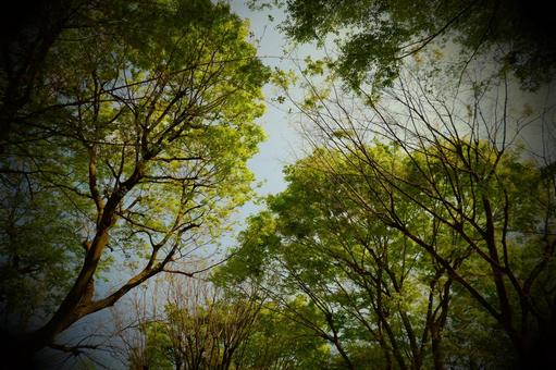 Early summer scenery with beautiful fresh green