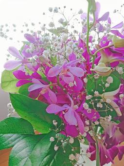 Bouquet of denfare and mokara, part 2