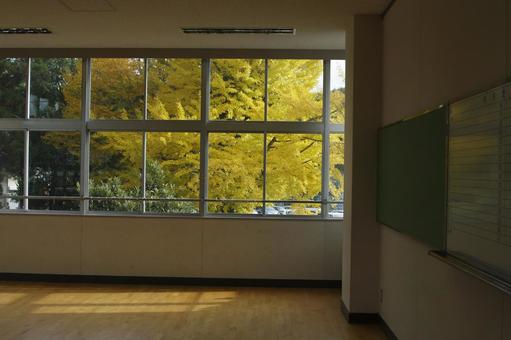Ginkgo tree seen from the classroom