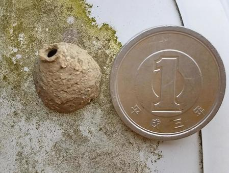 Comparison of Tokuri bee nests