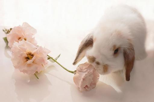 花とうさぎ ホーランドロップ