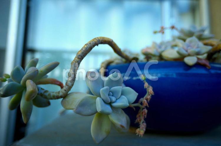 多肉植物の鉢植えの写真