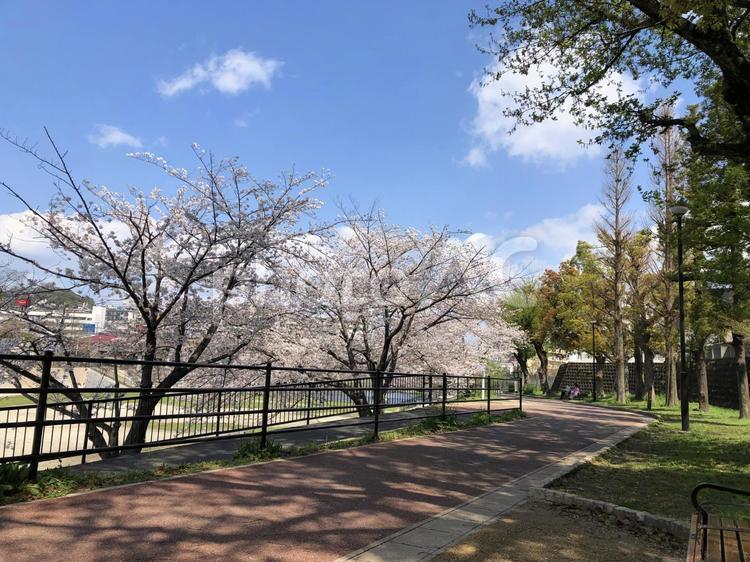 福岡シティ  野間大池公園の写真