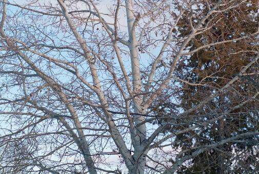 Winter trees in winter 16