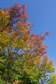 Fall tree 5