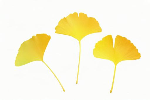 Gingko leaf cutout 4
